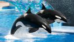 SeaWorld still in business.